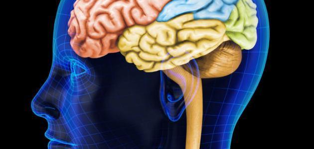 صورة اين يقع النخاع الشوكي , معلومات حول النخاع الشوكي