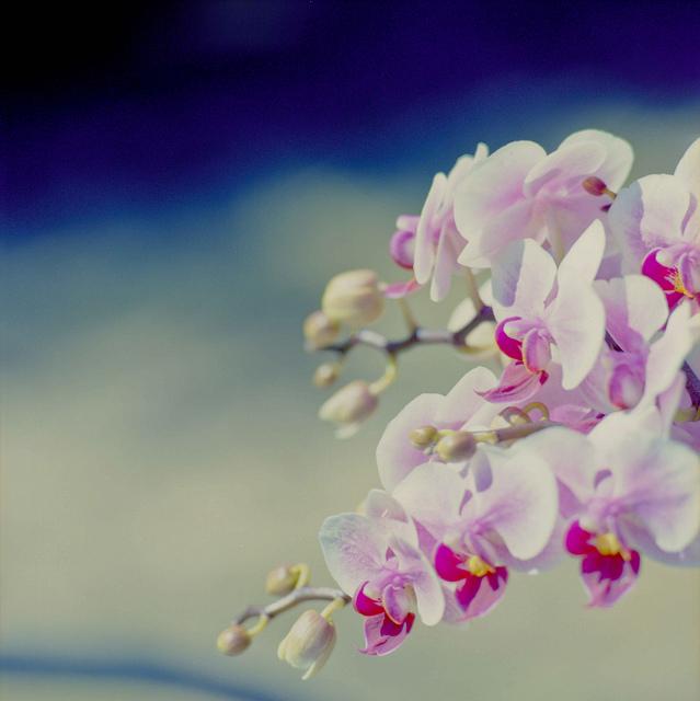 صورة تفسير حلم زرع الورد , رؤية الورد في الحلم ودلالته