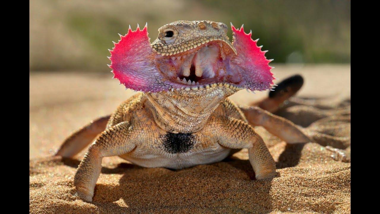 صورة بحث عن الزواحف , معلومات خطيره عن الزواحف
