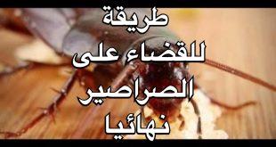 صور طريقة التخلص من الصراصير , تعلم كيف تتخلص من الحشرات القاذورات