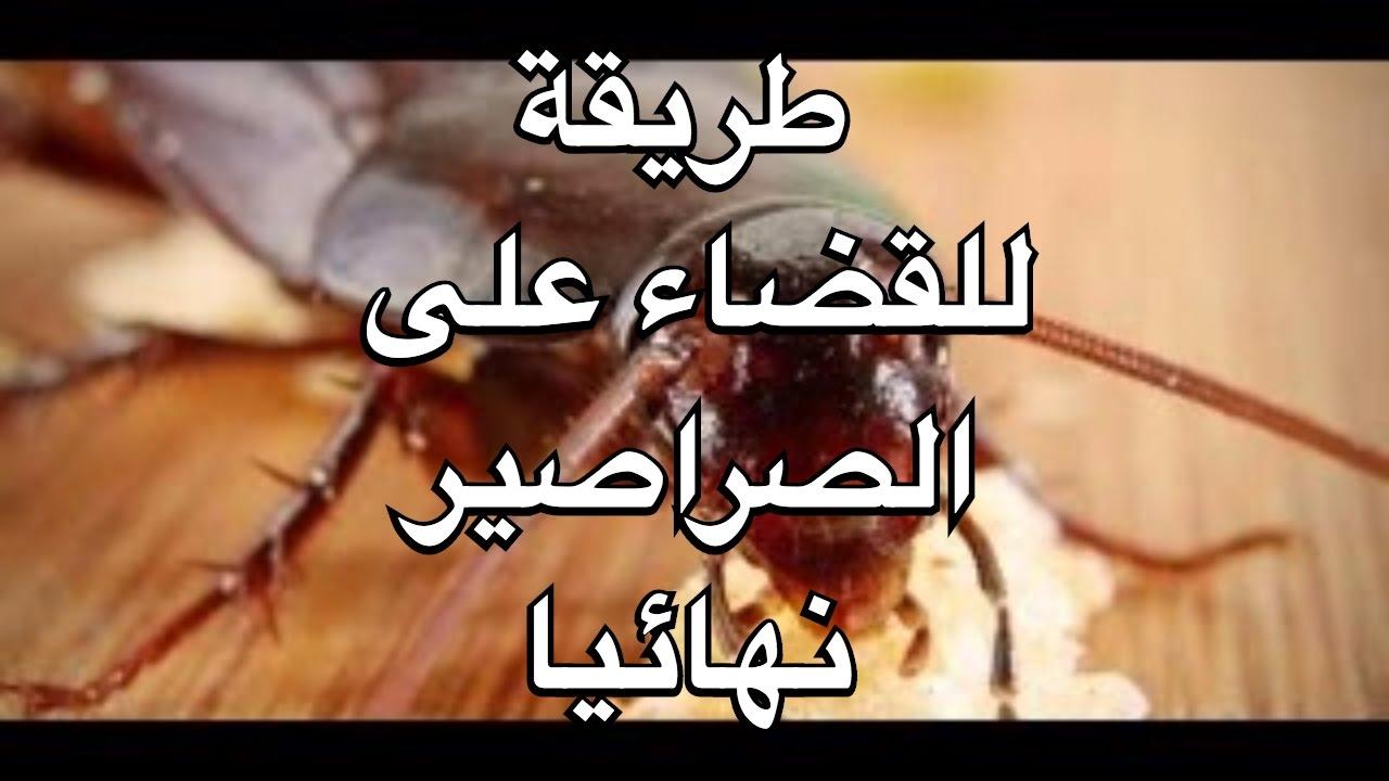 صورة طريقة التخلص من الصراصير , تعلم كيف تتخلص من الحشرات القاذورات
