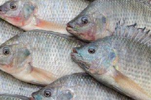 صور السمك الابيض في المنام , تعرف على تفسير حلم السمك في المنام