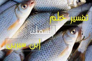 صور سمك في المنام , تعرف على تفسير السمك في الحلم