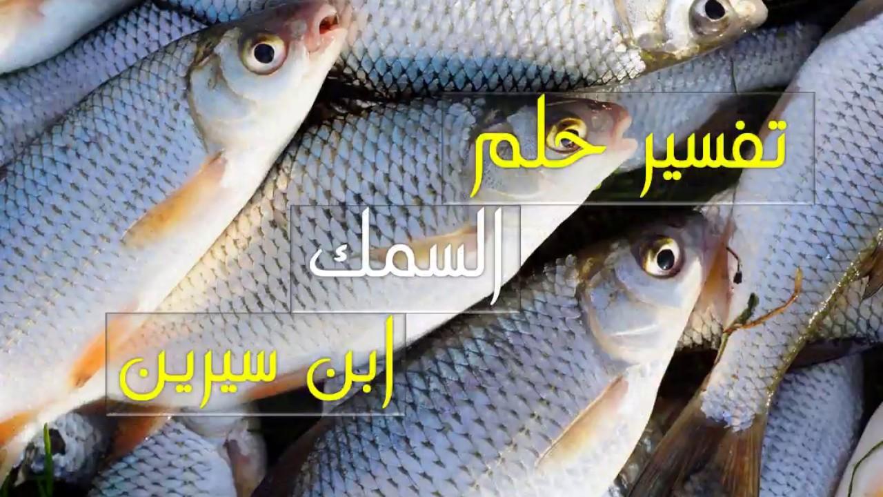 صورة سمك في المنام , تعرف على تفسير السمك في الحلم