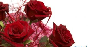 صور ورود رومانسية جدا , اقوي صور الورد الرومانسي الرائع