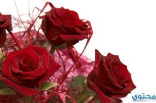 صورة ورود رومانسية جدا , اقوي صور الورد الرومانسي الرائع