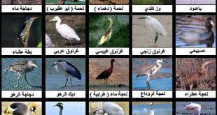 صورة من الطيور من 10 حروف , لغز مميز عن الطيور