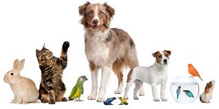 صور مستلزمات حيوانات اليفة , كل ما يخص الحيوان الاليف