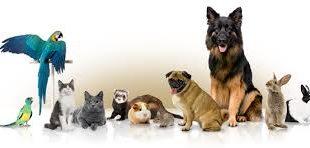 صورة مستلزمات حيوانات اليفة , كل ما يخص الحيوان الاليف