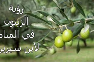 صور قطف الزيتون في المنام , دلالة قطف الزيتون من الشجر في الحلم