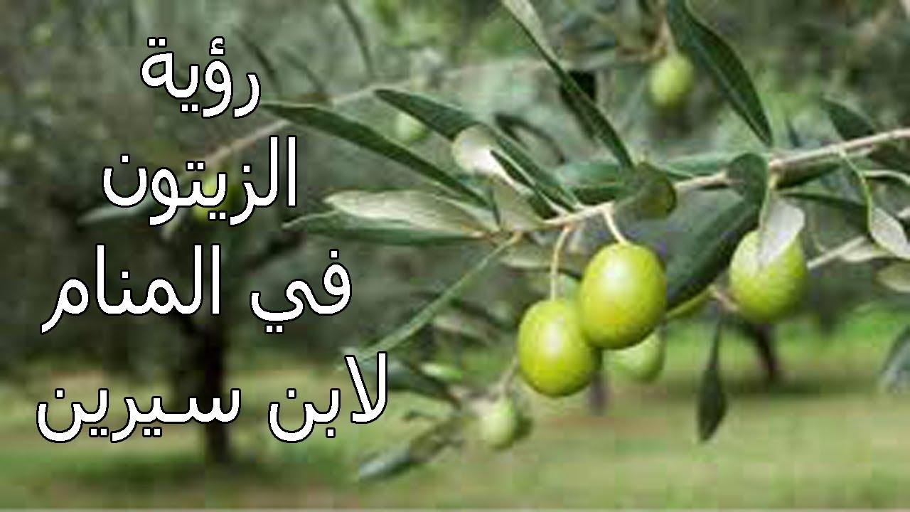 صورة قطف الزيتون في المنام , دلالة قطف الزيتون من الشجر في الحلم