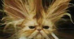 صور لقطط مضحكة , خلفيات مضحكة اوي للقطط الصغيره