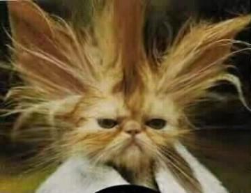 صورة صور لقطط مضحكة , خلفيات مضحكة اوي للقطط الصغيره