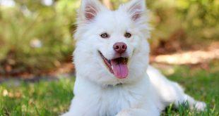 صورة الحلم في الكلاب , اشاهد كلب في المنام