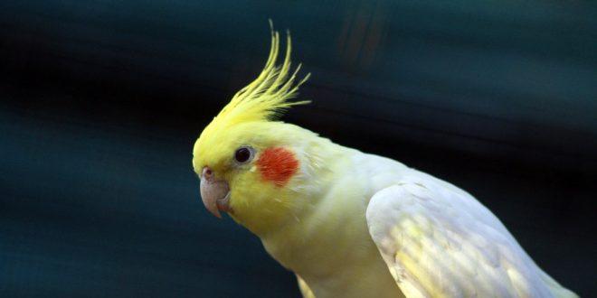 صورة صور عصافير الزينه , اجمل مخلوقات في الحياة